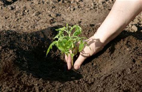 Pflanzen Lehmiger Boden by Which Soil Is Best For Plant Growth Lovetoknow