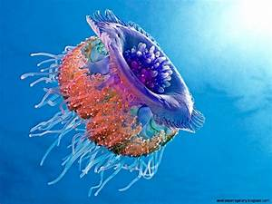 Most Colorful Jellyfish | Wallpapers Gallery