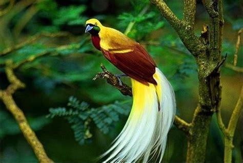 bird of paradise bird of paradise animal wildlife