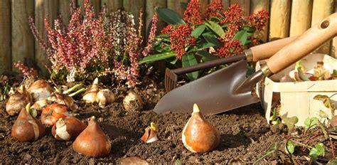 Welche Pflanzen Im Herbst Pflanzen by Welche Pflanzen Im Herbst Setzen