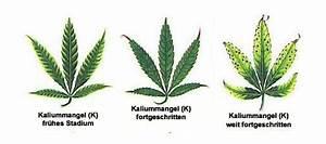 Bester Cannabis Dünger : d nger ~ Michelbontemps.com Haus und Dekorationen