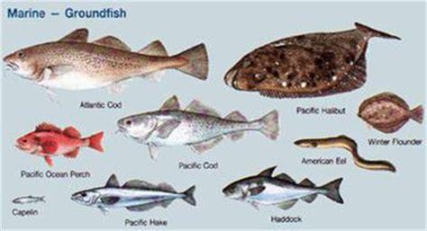 fish  canadian encyclopedia