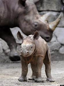 It's Endangered Species Day, But These Adorable Babies ...