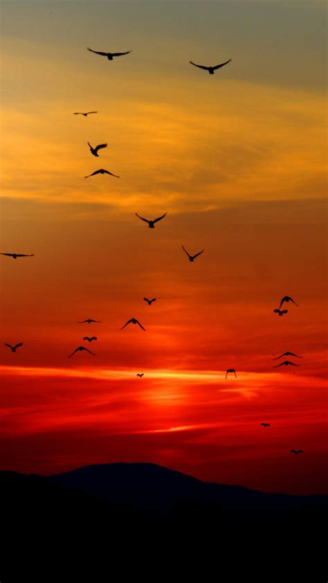 birds  sunset wallpaper mobile desktop background