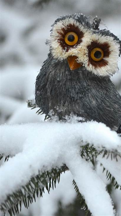 Snow Animals Funny Owl Pines Birds Wallpapers
