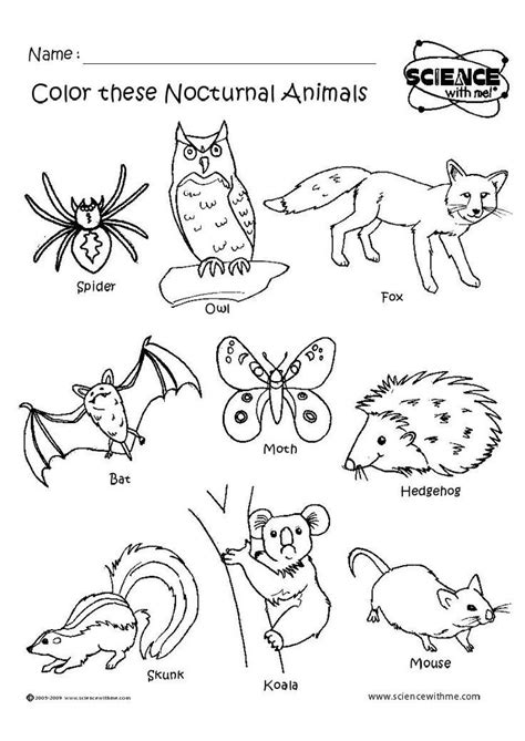 nocturnal animals preschool nocturnal animals animal worksheets diurnal animals