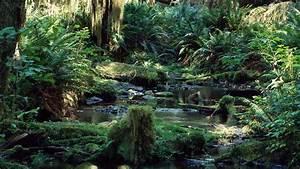 amazon jungle tropical rainforest tropical rainforest