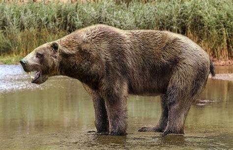 Разные виды медведей