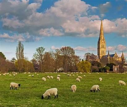 Cathedral Salisbury Bing Brown Chipmunk