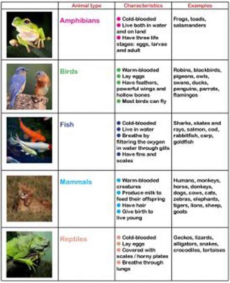 Animals in primary school KS1 animal learning activities