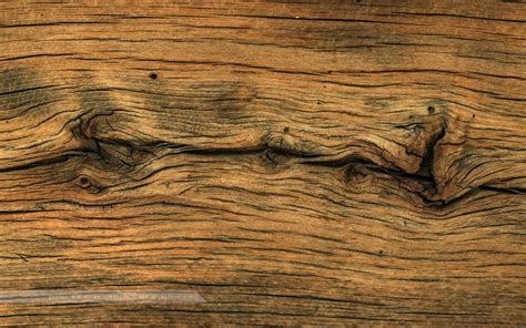 wood like 50 hd wood wallpapers for free download