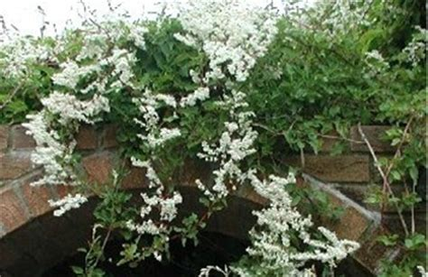 How To Position Climbing Plants