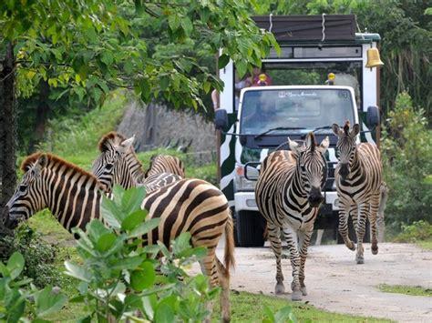 bali safari marine park bali driver private