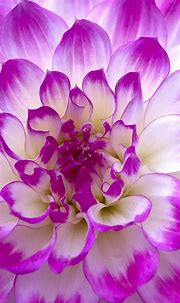 Flower Wallpapers for Android Mobile with 1440×2560 for LG ...