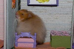 Hamster is tired - Teh Cute