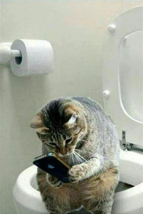 cat   toilet   mobile phone luvbat