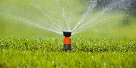 Tipps Für Die Richtige Bewässerung Dehner