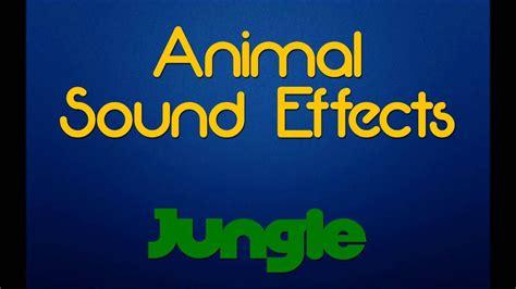 rainforest jungle ambiance animal sound effects youtube