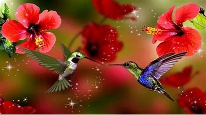 Spring Season Wallpapers Android Desktop Bird Nature