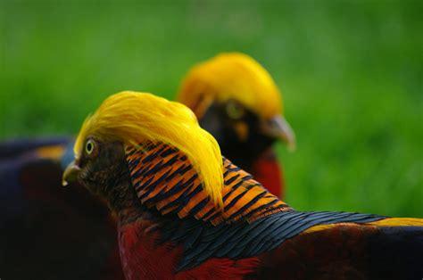 Colourful birds - Pentax User Photo Gallery