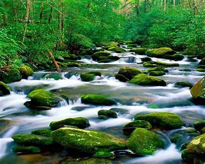 Pristine Untouched Nature Riverbed Mountain River Rock