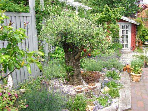 Olivenbaum Düngen  Mein Schöner Garten