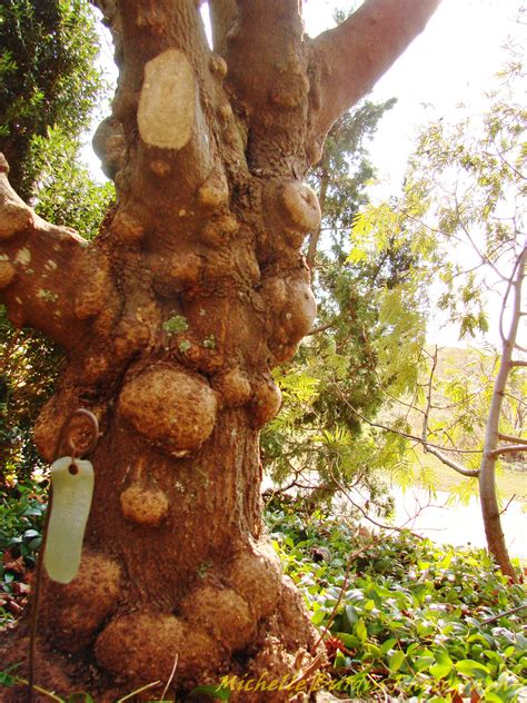 heres  welcoming autumn lewis ginter botanical garden