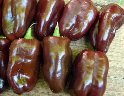 sweet chocolate choco sweet bell pepper