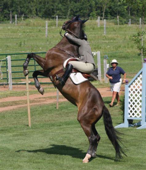 horse horses rearing calm nervous stress dangerous managing keep vices unwanted rider extension behavior saddle behaviors umn brown caption holding