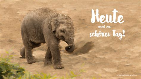 elefant hintergrundbilder
