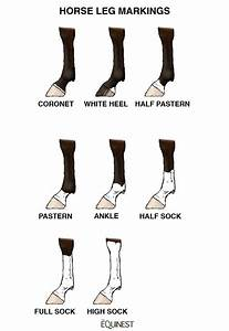 Feet Markings And Their Name