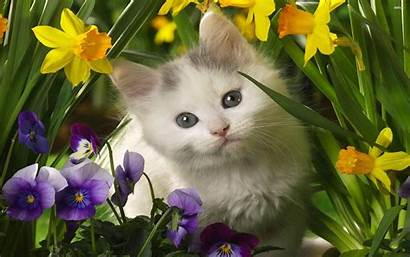 Cat Wallpapers Cool Kitten Cats Kittens Kitty