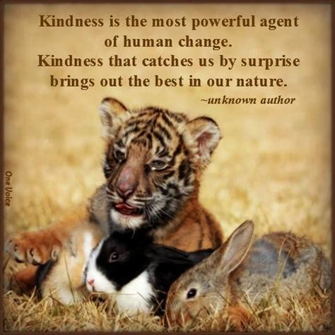 quotes  kindness  animals quotesgram