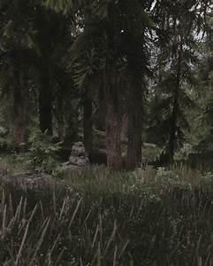 Falkreath, Forest, At, Skyrim, Nexus