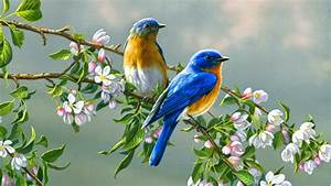 Cute Little Love Birds Free Download Wallpaper For Pc ...