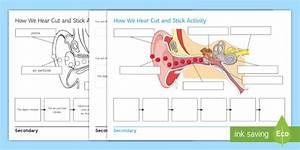 How We Hear Cut And Stick Worksheet    Worksheet