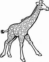Giraffe Coloring Printable Animals Zoo sketch template