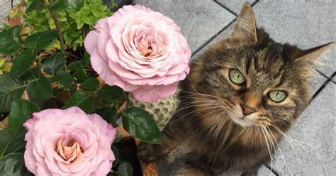 unbedenkliche pflanzen für katzen dolly s 10 geburtstag katzen katzenhalter tipps katzen katzen spielzeug und katzen toilette