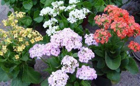 best flowering plants for indoors best flowering indoor plants