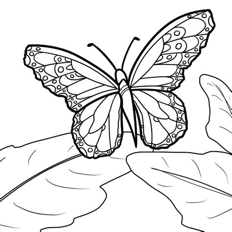 monarch butterfly coloring pages  print  coloring