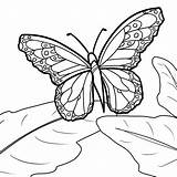 Butterfly Coloring Monarch Pages Print Printable Blank Drawing Sheets Deviantart Sheepdog English Getcolorings Getdrawings Templates Source Flowers Adults sketch template