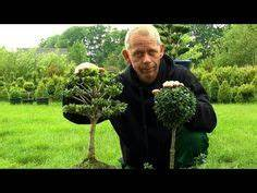 Bux Schneiden Wann : buchsbaum schneiden boxwood cutting buxus style youtube ~ Lizthompson.info Haus und Dekorationen