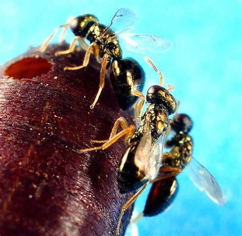 was machen wespen was machen wespen wespen vertreiben die besten tipps das haus was machen wespen im winter