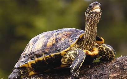 Turtle Form