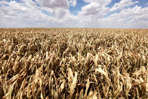 drought stalks  global food supply bloomberg
