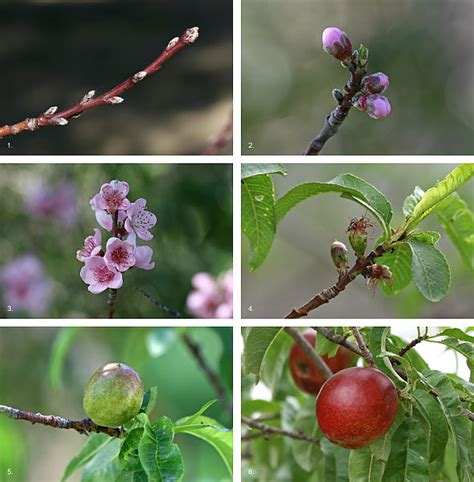 buds tree care fruit nut tree care update organic spraying regimen details and buds blossoms report