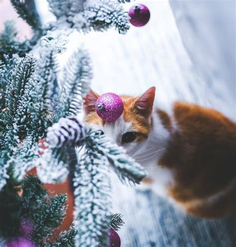 are christmas trees poisonous to cats change one life