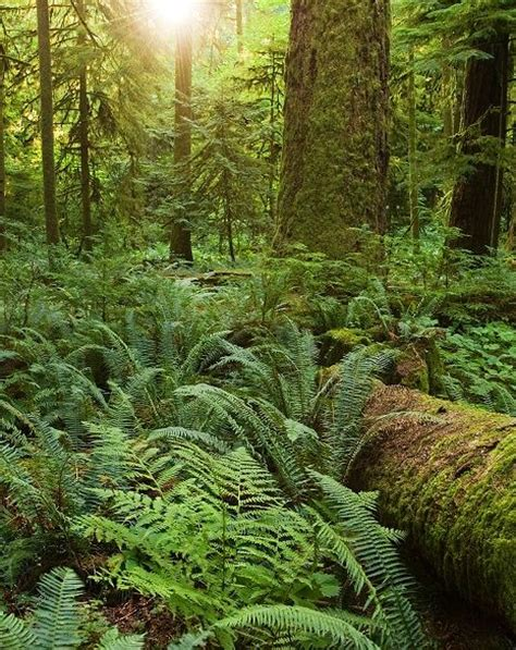 Pacific Northwest Native Plant Database Pacific