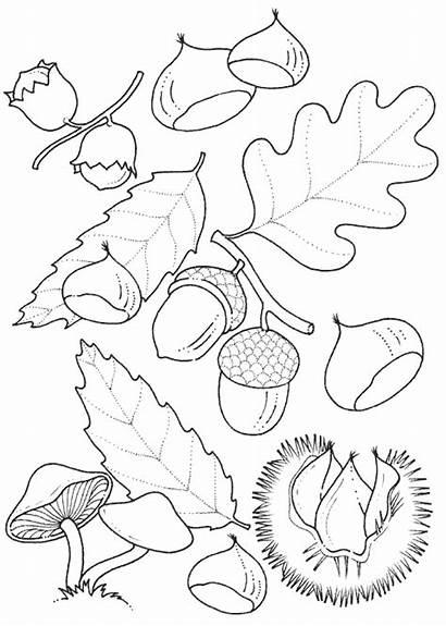 Herfst Bladeren Herfstwerkjes Natuur Knutselen