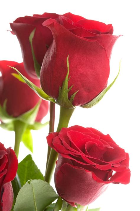 17 best images about marc 17 best images about marc s fresh cut flowers on pinterest